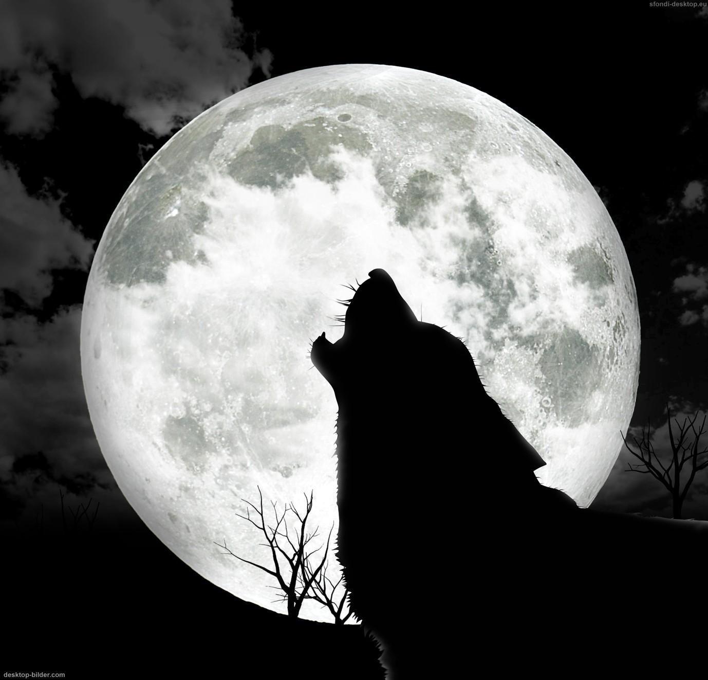 Serakus Serigala